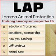 Lamma Animal Protection